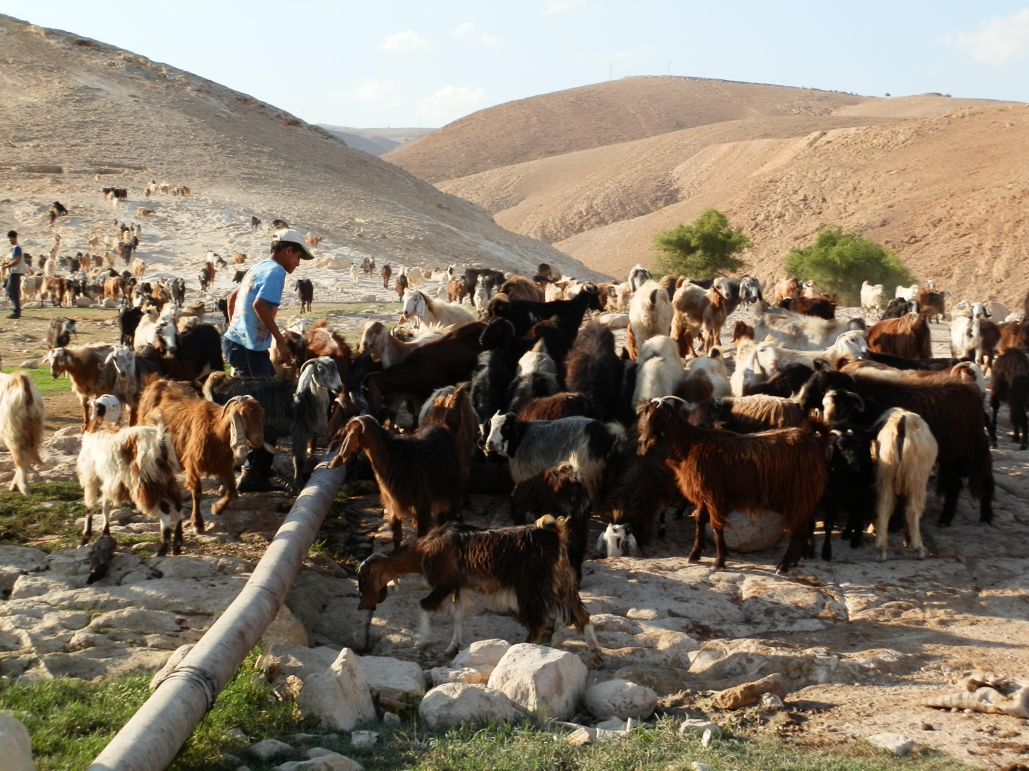 Israelse militêre intimidasie in die besette palestynse gebiede